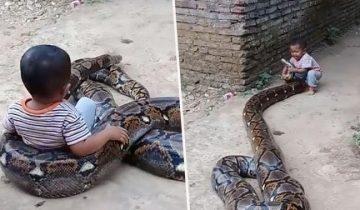 «Ты куда, большой червяк? А поиграть?». Малыш из Индонезии не дает покоя 4-м питону