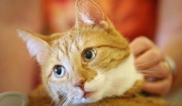 В Новой Зеландии надумали избавиться от домашних кошек