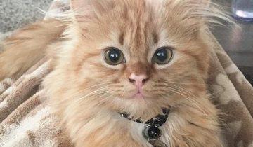 Её называют «кошачьей Моной Лизой» из-за постоянной загадочной улыбки