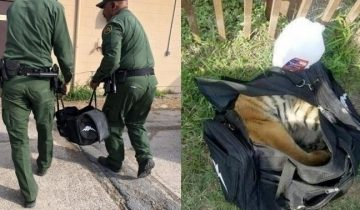 Пограничники изрядно удивились, что тащили через кордон контрабандисты в обычной сумке