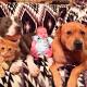 4 собаки и кот ухаживают за новорожденным малышом!
