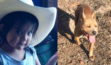 Внезапно питбуль бросился на свою маленькую хозяйку…Когда отец понял в чем дело, он стал ловить собаку