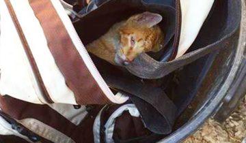 Она увидела рюкзак на помойке, внезапно он пошевелился