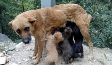 Добрый самаритянин обыскал всю округу, чтобы вернуть щенкам их маму