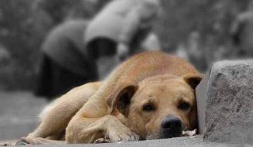 Штраф 10 000 Евро или 12 месяцев тюрьмы за выброшенное животное в Италии!