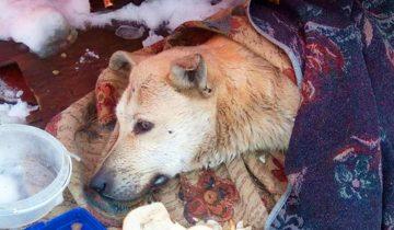Бездомный пёс лежал в парке и тихо погибал от ранений… Люди шли мимо