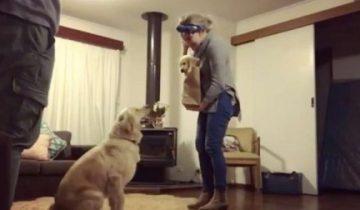 Реакция взрослой собаки на нового щенка в доме растопит любое сердце!