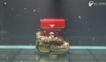 Вот что случится, если посадить осьминога в банку и закрыть ее крышкой