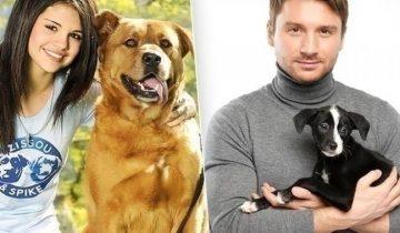 Звезды, которые взяли собак из приюта