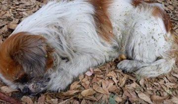 Собаку выбросили на ходу из машины, она страдала, а люди проезжали мимо…