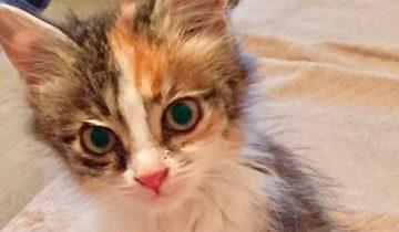 На бордюре сидел котёнок и у него даже не было сил мяукать!