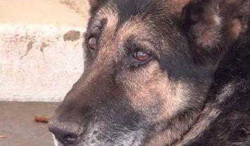Старенький пес прощался с жизнью, когда его выводили из вольера