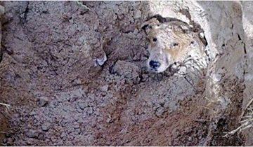 Парализованная собака доползла до школы. Она надеялась на помощь людей, но там ее ждала гибель…