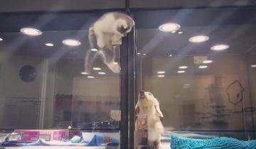 Отчаянный побег маленького котенка к новому другу растрогал пользователей Интернета