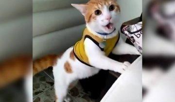 Кот-болельщик, который кричит «Гол!», восхитил пользователей Сети!