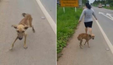 Тощий щенок подбегал к каждому прохожему и выпрашивал еду, но все проходили мимо