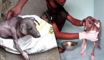 Трогательное и жизнеутверждающее видео перевоплощения спасенного щенка