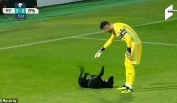Игривая собачка сорвала футбольный матч, к вящей радости публики