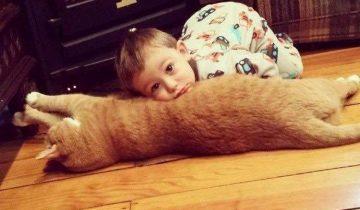 Брошенный рыжий кот стал ангелом-хранителем маленького мальчика