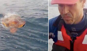 Байдарочники увидели в воде черепаху, запутавшуюся в пластике, и бросились ей на помощь