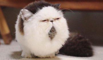 Кот, который всегда выглядит так, словно только что проснулся от будильника