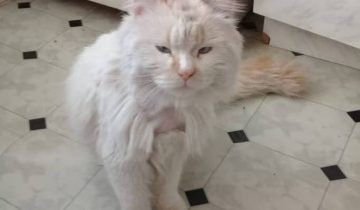 На остановке Дина заметила грустного кота. Через несколько часов она увидела его снова