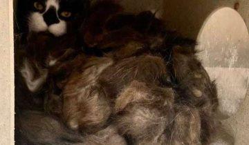 Семья переехала и нашла в подвале необычное животное
