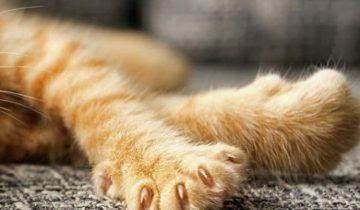 На рыжего котенка рычали большие псы, окружив его со всех сторон. Рядом шла девушка