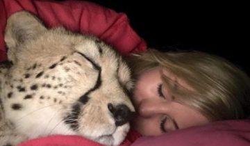 Смелая девушка спасла гепарда. Теперь они не разлей вода