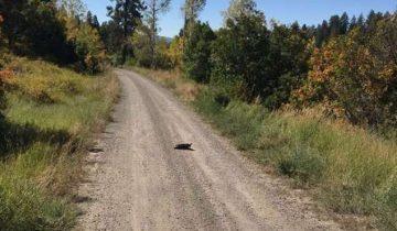 Маленькую собачку бросили в глуши…Она сидела на дороге и боялась пошевелиться