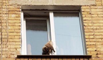 Кот застрял в окне и несколько часов ждал помощи. Но владельцам было плевать