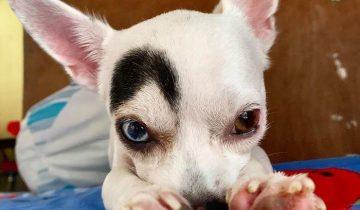 Лаки — милый пес с необычной внешностью