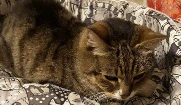 Кошка боролась за жизнь и пришла просить о помощи