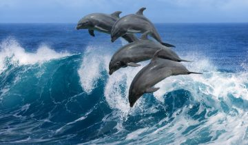 Индия считает дельфинов личностями. Они закрыли дельфинарии