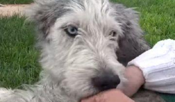 Собака сильно хромала, но все равно верила, что люди ей помогут