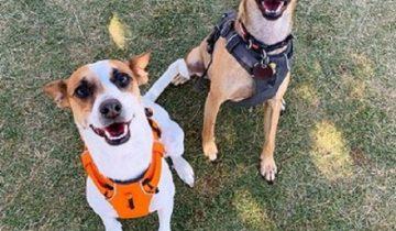 Печальное событие помогло собаке стать членом новой семьи