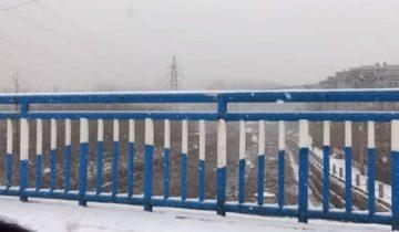 Бедный песик пытался спрятаться от снега: он потерял свой дом