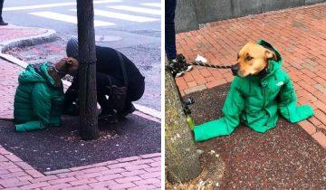 Чтобы пес не замерз, девушка надела на него свою куртку. Теперь он самый модный