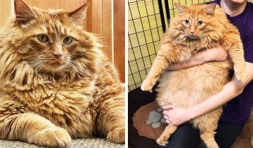 Котик по имени Базука попал в приют и стал суперзвездой