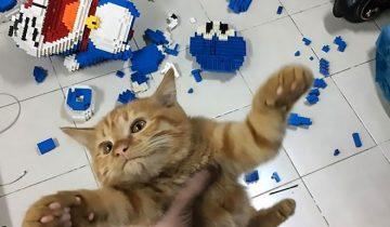 Мужчина неделю собирал изделие, а кот испортил его за секунду