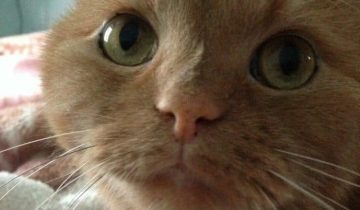 Кошка почувствовала, что девушка, которая ее кормит, скоро уедет
