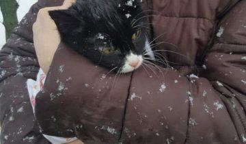 Девушка случайно заметила кошку, она почему-то не двигалась. Мурлыка примерзла ко льду