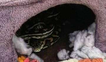 Кошка стала вести себя не так, как всегда. Оказалось в дом заползла змея