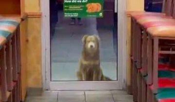 Каждый вечер пес появляется на пороге ресторана… В его глазах столько надежды
