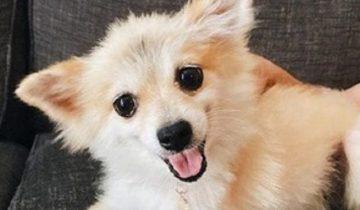 Собака не вписалась в стандарты породы и владельцы ее просто выбросили