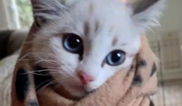 Бездомный котенок шипел и боялся довериться людям