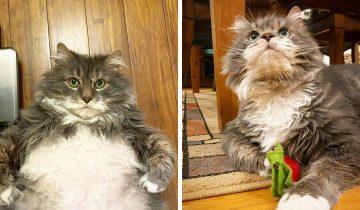 Толстяк Уилфорд весит как три кота, его животик очаровательный и люди его обожают!