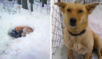 Собака жила в снегу вместе с 6 щенками.Она не бросила их несмотря ни на что!