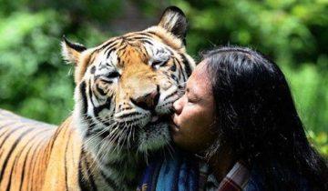 Необычная дружба: парень из Индонезии дружит с тигрицей