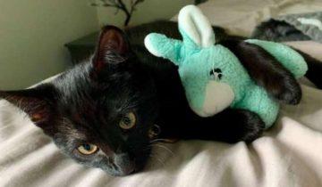 Больному котику подарили одеяло. Через 10 месяцев он все равно с ним не расстается